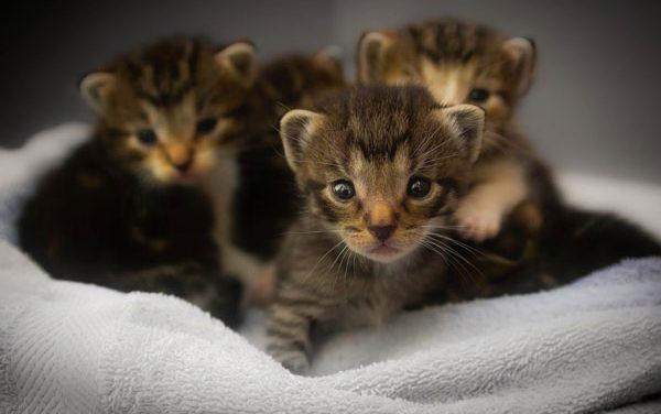 Hướng Dẫn Cách Chăm Sóc Mèo Con Theo Từng Giai Đoạn Tuổi